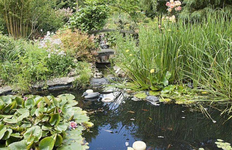 Bassin de jardin, utile pour élever des poissons ?